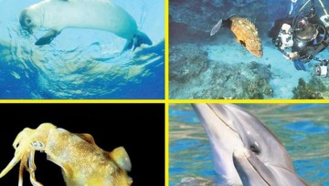 Deniz canlıları tehlike altında